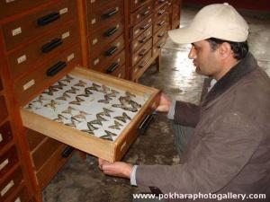 Annapurna Butterfly Museum